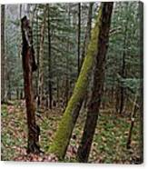 Green Timber Canvas Print