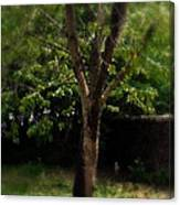 Green Tree In Park Canvas Print