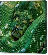green tree python Macro Canvas Print