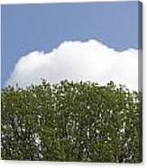 Green Tree Stands Out Against The Blue Sky Canvas Print