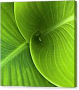 Green Twin Leaves Canvas Print