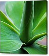 Green Twist Canvas Print
