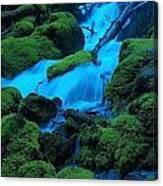 Green Velvet Moss Canvas Print