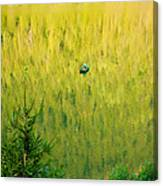 Green Vertigo Canvas Print