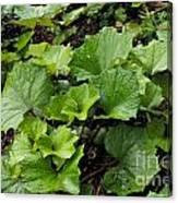 Green Vine Canvas Print