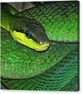 Green Viper Canvas Print