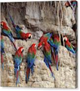 Green-winged Macaw Canvas Print