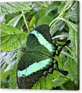Green Wings 2 Canvas Print