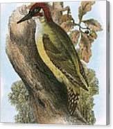 Green Woodpecker Canvas Print