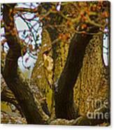 Green Woodpecker Richmond Park Canvas Print