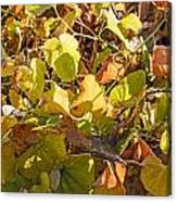 Green Yellow And Dry Leaves Canvas Print