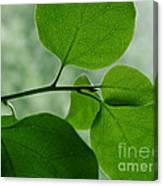 Green Zen Canvas Print