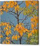 Greenbacks And Klondike Gold Canvas Print