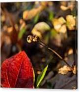 Greenbriar Leaf And Wintergreen Seedpod Canvas Print
