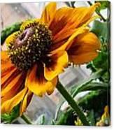 Greenhouse Daisy Canvas Print