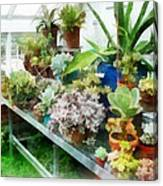 Greenhouse With Cactus Canvas Print