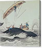 Greenland Whale Book Illustration Engraved By William Home Lizars  Canvas Print