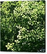 Greenleaves Canvas Print