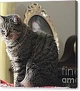 Greeting Card Cat Canvas Print