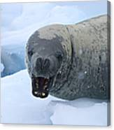 Greetings From Antarctica.. Canvas Print