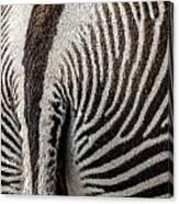 Grevy's Zebra 5 Canvas Print