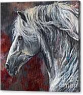 Grey Andalusian Horse Oil Painting 2013 11 26 Canvas Print