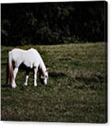 Grey In The Pasture Canvas Print