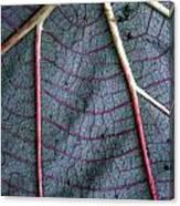 Grey Leaf With Purple Veins Canvas Print