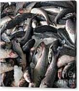 Grey Mullet Fish For Sale At A Fish Auction Canvas Print