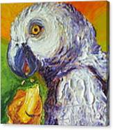 Grey Parrot And Juicy Mango Canvas Print