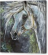 Grey Pony With Long Mane Oil Painting Canvas Print