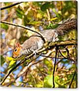 Grey Squirrel - Impressions Canvas Print