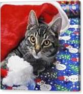 Grey Tabby Cat With Santa Claus Hat Canvas Print