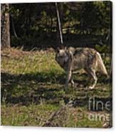 Grey Wolf   #3315 Canvas Print