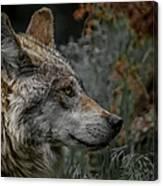 Grey Wolf Profile 3 Canvas Print