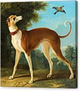 Greyhound In A Landscape Canvas Print