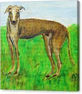 Greyhound Posing Canvas Print