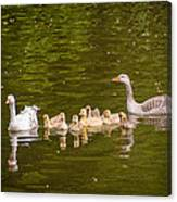 Greylag Goose Family Canvas Print