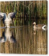 Greylag Goose Family Canvas Print