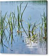 Greylake Reflections Canvas Print