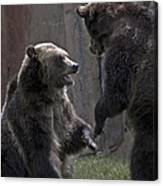 Grizzlies At Play Canvas Print