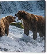 Grizzlies Fighting Canvas Print