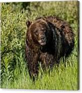 Grizzly 760 In The Morning Canvas Print