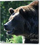 Grizzly-7755 Canvas Print