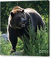 Grizzly-7759 Canvas Print