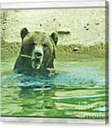 Grizzly Bath Canvas Print