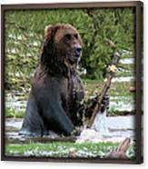 Grizzly Bear 08 Canvas Print