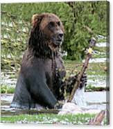 Grizzly Bear 6 Canvas Print