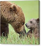 Grizzly Bear And Cub in Katmai Canvas Print