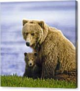 Grizzly Bear And Cub Canvas Print